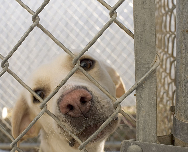 New Law that will stop the Cycle of Abusing Animals