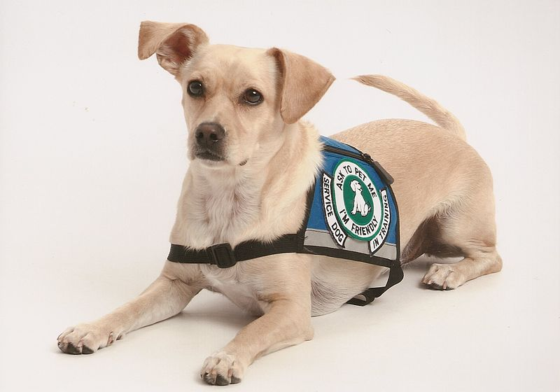 Arizona Law Cracks Down on Fake Service Animals