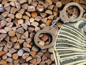 Wood Smuggling Bust