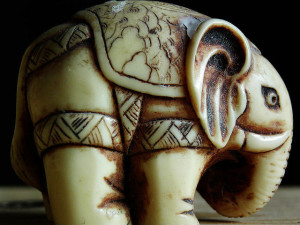 macro_elephant by Théo is licensed under CC BY 2.0